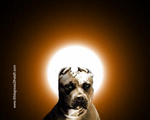 pitbull-god